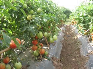 Sử dụng màng phủ nông nghiệp