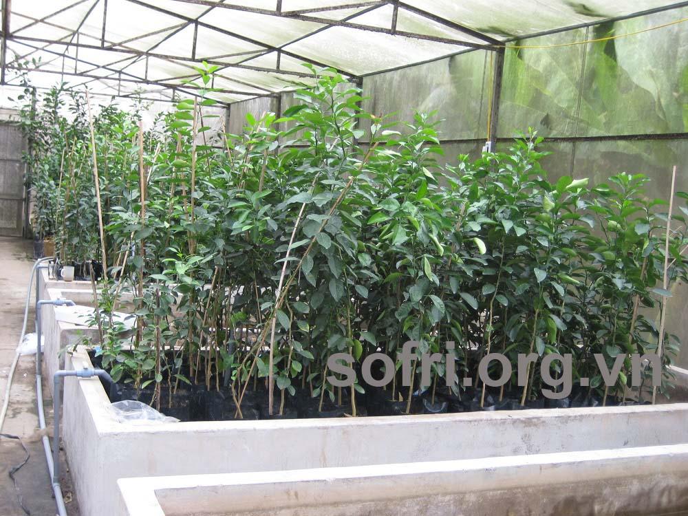 Kết quả chọn lọc các dòng/giống cây ăn quả chống chịu với điều kiện bất lợi của môi trường
