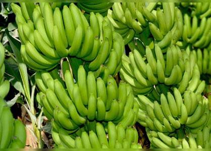 Gien thực vật được tìm thấy trong côn trùng, bảo vệ nó khỏi các chất độc trên lá