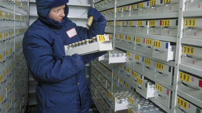 Nhà khoa học tại Ngân hàng hạt giống Thiên niên kỷ kiểm tra hạt giống trong kho. Ảnh: RBG Kew