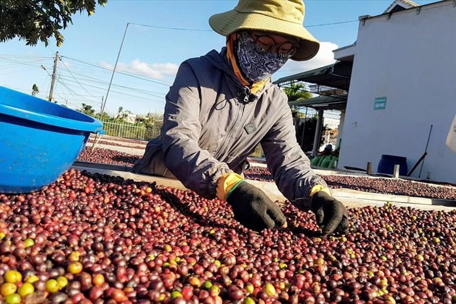 Châu Âu mở cửa, cơ hội cho nông sản Việt Nam