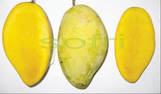 Viện Cây ăn quả miền Nam - là chỗ dựa tin cậy cho ngành sản xuất cây ăn quả của các tỉnh phía Nam