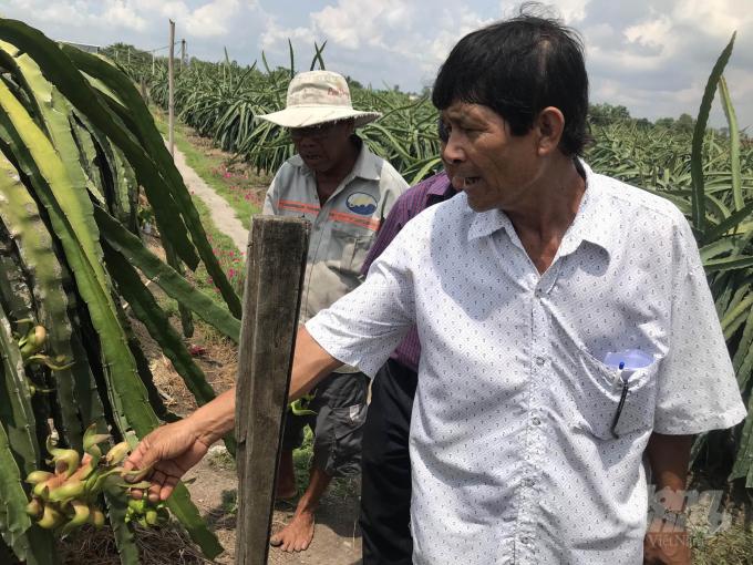 Chuyển đổi trồng thanh long mang lại hiệu quả gấp 2,2- 10 lần lúa ở xã Bình phú, huyện Gò Công Tây (Tiền Giang). Ảnh: MĐ